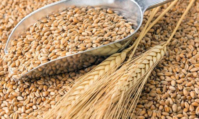 Нижегородские аграрии собрали 1 миллион 100 тысяч тонн зерна нового урожая